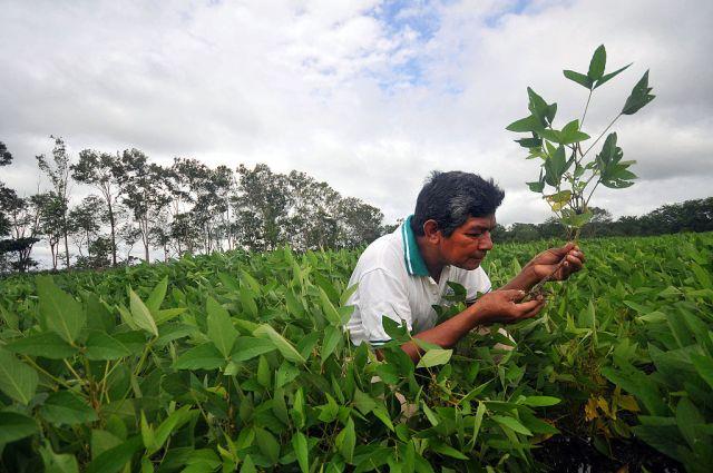 Bolivian soy plantation