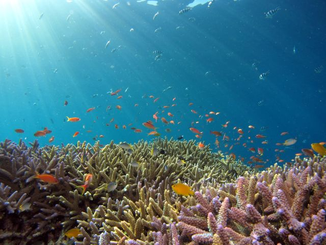 An coral reef with fish.