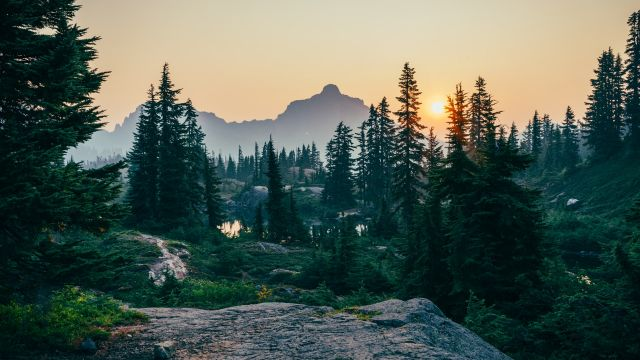 Pine trees in Rampart Lakes at dawn.