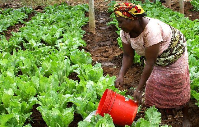 African woman watering garden