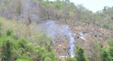 Deforestation, Luang Prabang, Laos