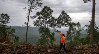 U.S. Forest Service ranger walking in a timber area in Pisgah National Forest