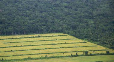 Farming field in the Amazon