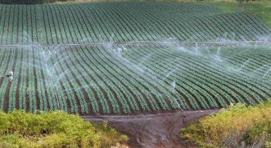 Conventional sprinkler irrigation