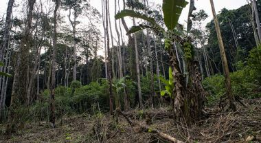 Forest in the Democratic Republic of Congo