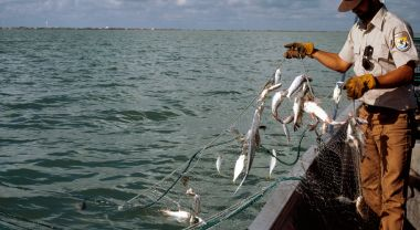 While oceans support lucrative fisheries, these benefits are rarely accounted for in ledgers. Photo by Pedro Ramirez Jr./U.S. Fish and Wildlife Service