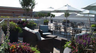 WRI Green Roof Terrace