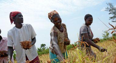Climate-smart agriculture in Kenya