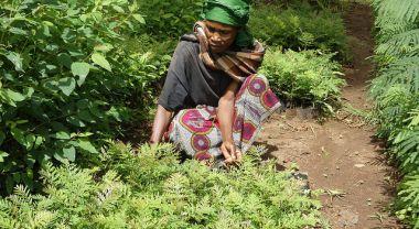 A farmer in Lushoto, Tanzania prepares seedlings for transplanting. Photo credit: P. Kimeli (CIFOR)
