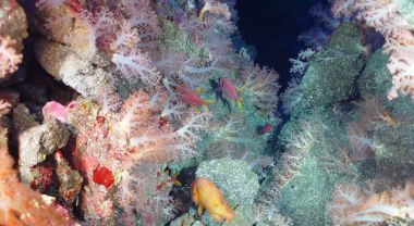 Algae, corals and fish in an ocean gully.