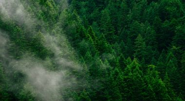 A forest in a fog.