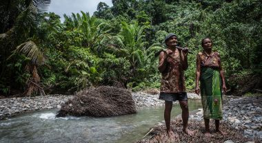 Harvesting sago along the Tuba River in Maluku province, Indonesia