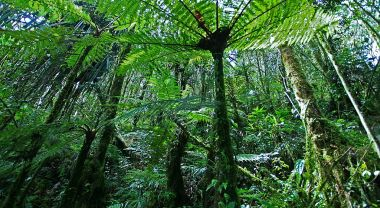 Rainforest in Papua, Indonesia