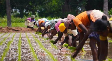 Women plant rice in Tamil Nadu, India.