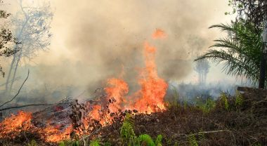 Forest fires in Kalimantan, Indonesia