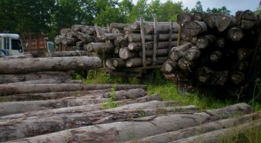 Illegal logging accounts for up to 90 percent of forestry activities in some key tropical production forests and 30 percent of globally traded wood. (Sumatra, Indonesia) Photo by CIFOR/Flickr.