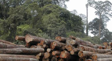 Forest fragmentation is caused by the expansion of logging, mining and development activities. Photo credit: Angela Sevin, Flickr