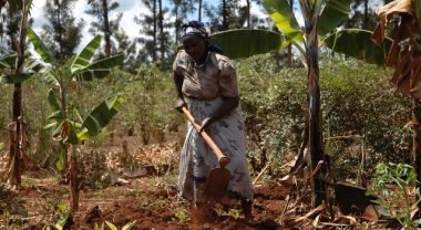A smallholder farmer plants maize. Photo by CIMMYT/Flickr.