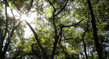 Mato Grosso forest