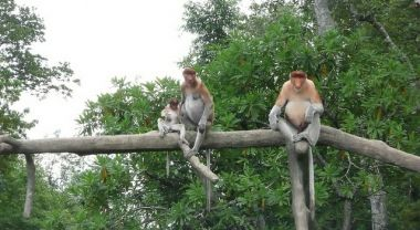 Flora and fauna of the Borneo Rainforest. Photo by Bill Barclay, Rainforest Action Network