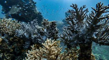 A cluster of coral in the ocean.