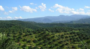 Agricultural development is the largest driver of deforestation in Indonesia. Photo by Achmad Rabin Taim/Wikimedia Commons.