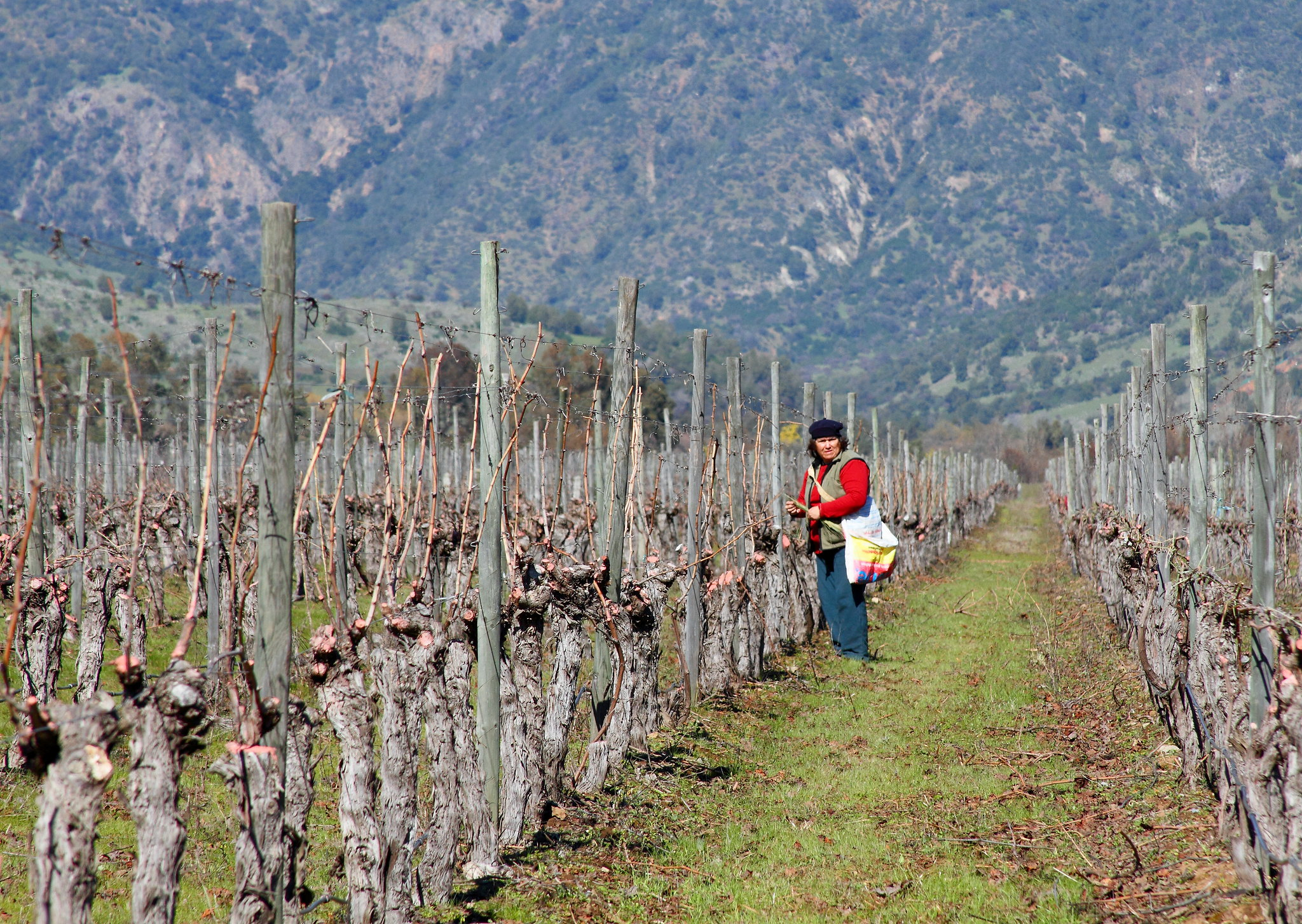 <p>Chile\'s agriculture sector depends on adapting water use to climate change. Photo by Daniel Garcia Neto/Flickr.</p>
