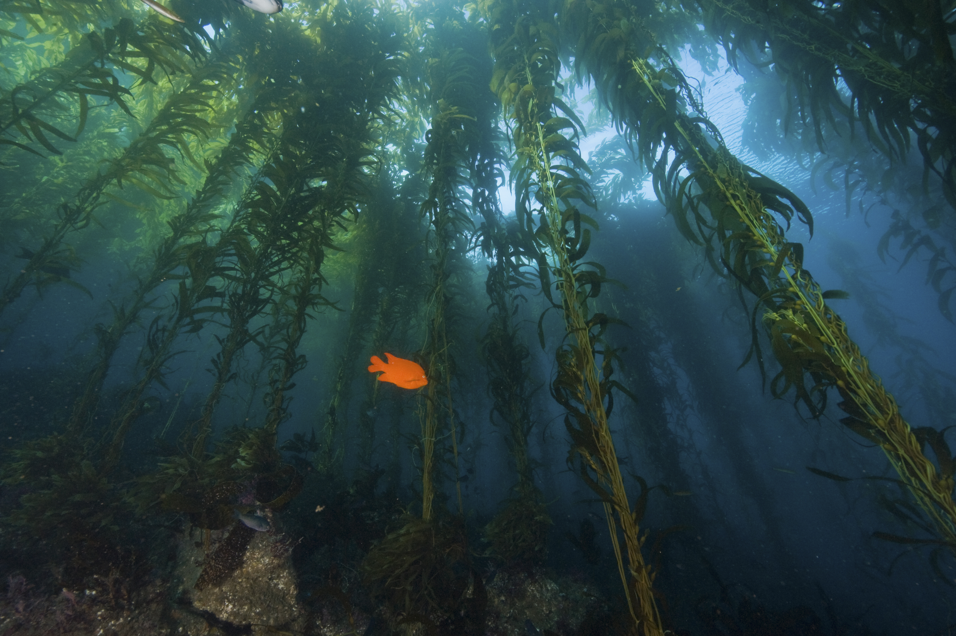 <p>The ocean may offer potential carbon removal options, like seaweed cultivation, that could also have ecological benefits. Photo by the National Parks Service</p>