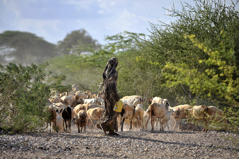 <p>In Wajir, consulting smallholder farmers and nomadic herders helped officials understand the local impacts of climate change and increase the likelihood of maintaining resilience projects long-term. Photo by Water, Land and Ecosystems/Flickr</p>