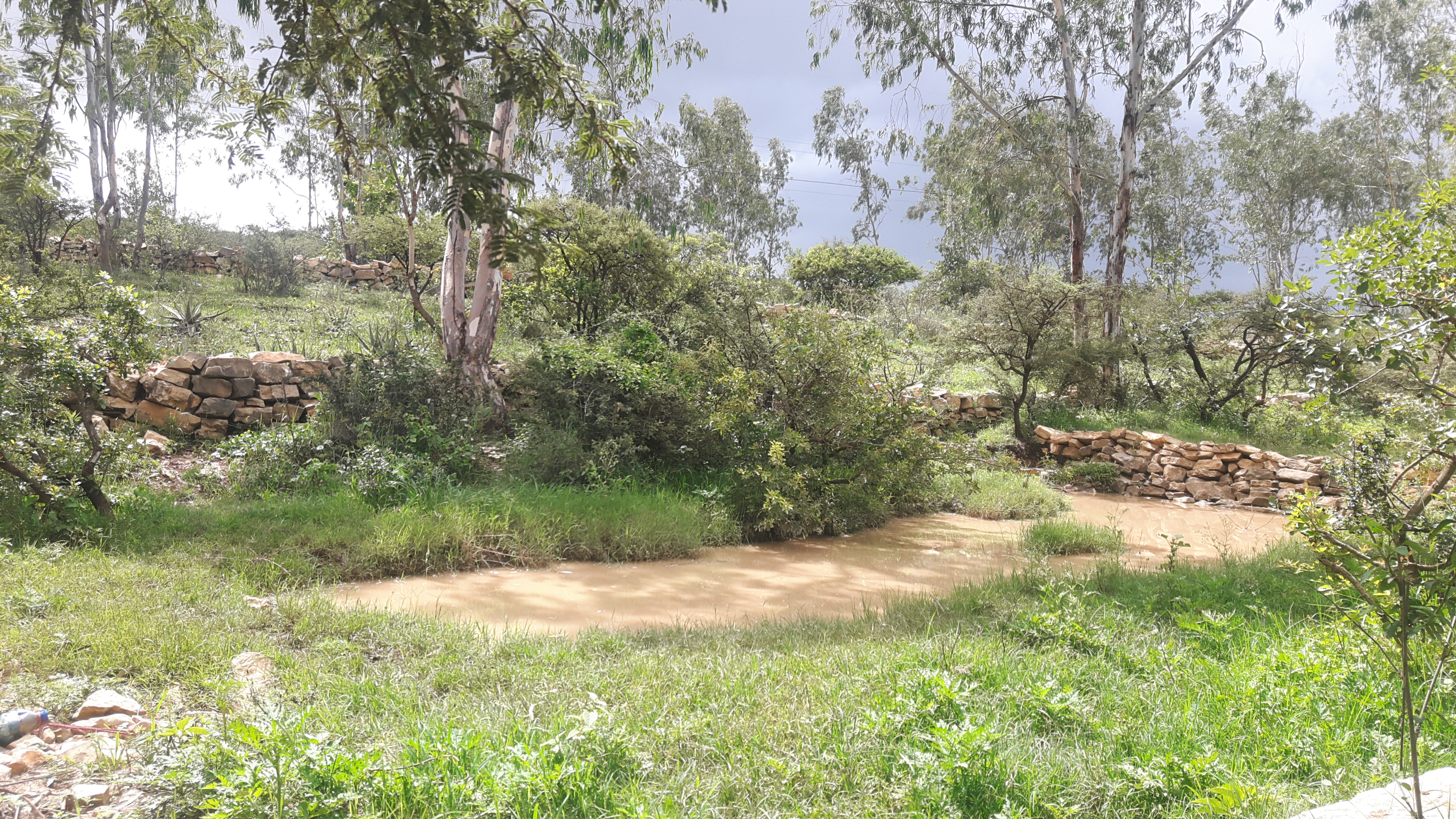 <p>State-run and private businesses throughout Ethiopia are restoring land and creating jobs. Photo by Meseret Shiferaw/WRI</p>