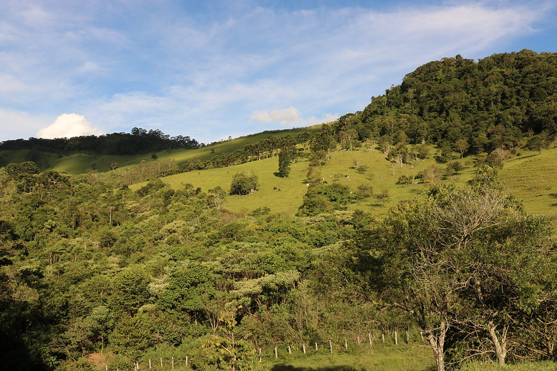 <p>By letting the forest naturally regrow over 11 million hectares, people in Brazil are fighting climate change. Credit: James Anderson/WRI</p>