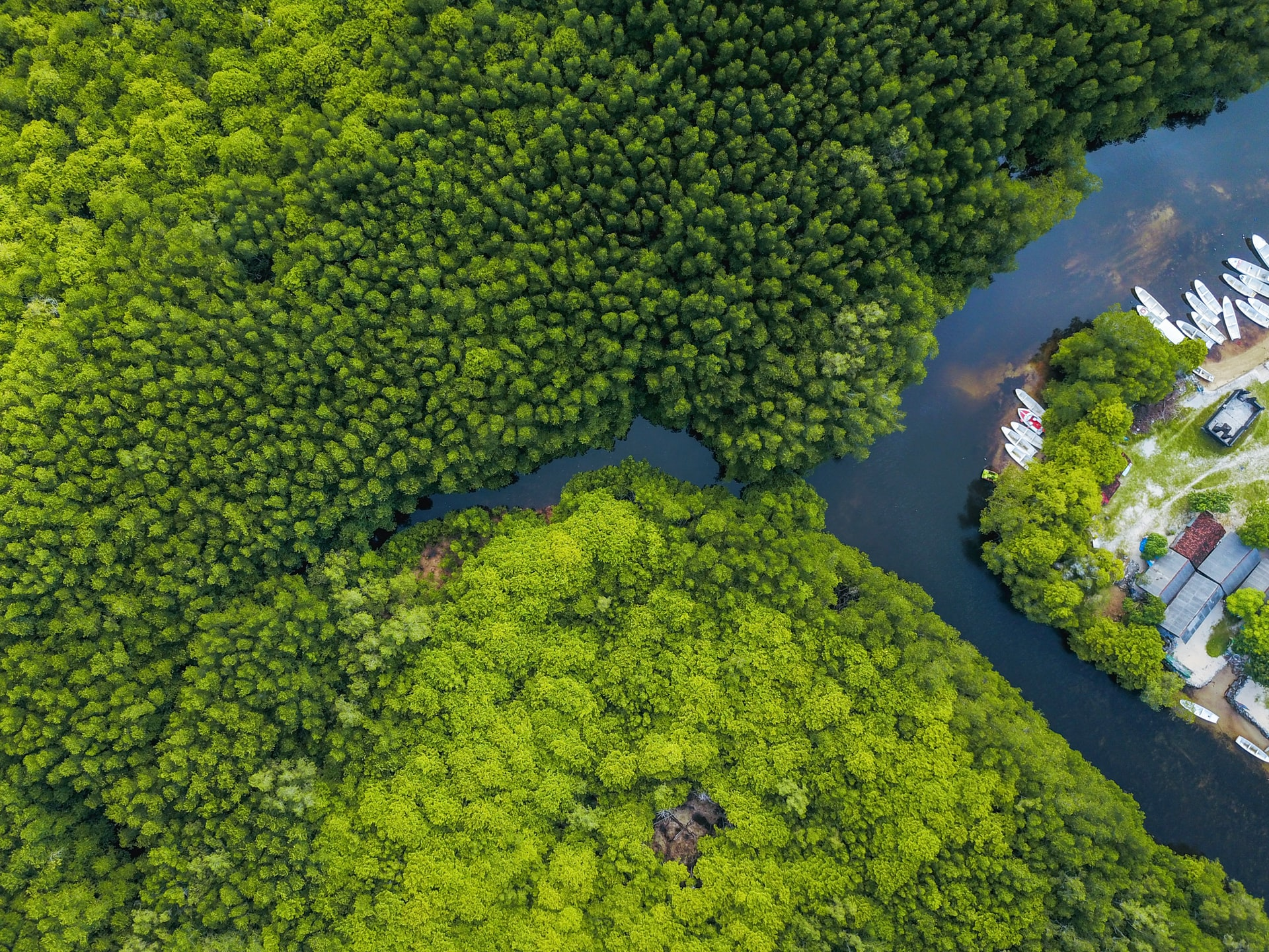 <p>The One Soul One Tree mangrove restoration campaign in Indonesia provided a new income source for residents in addition to creating environmental benefits. Photo by Joel Vodell/Unsplash</p>