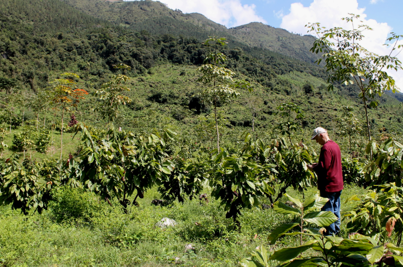 <p>In Guatemala, impact investor 12Tree is growing sustainable cocoa while protecting natural forests. Photo by 12Tree.</p>