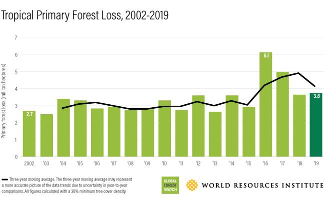 Bosverlies in miljoenen hectaren sinds 2002