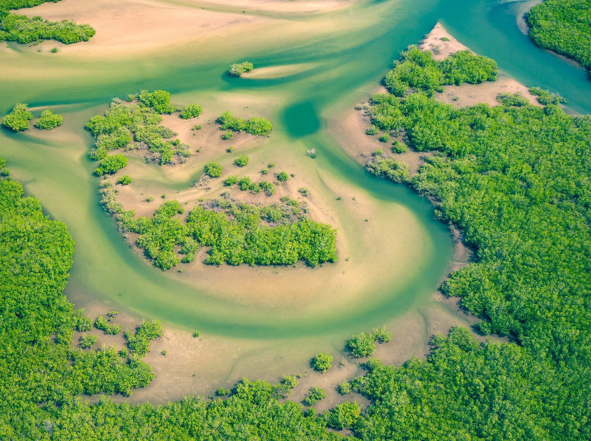 <p>Mangrove forests such as this one in Joal Fadiout, Senegal can be a critical source of nature-based solutions. Photo by Curioso Photography/Unsplash</p>