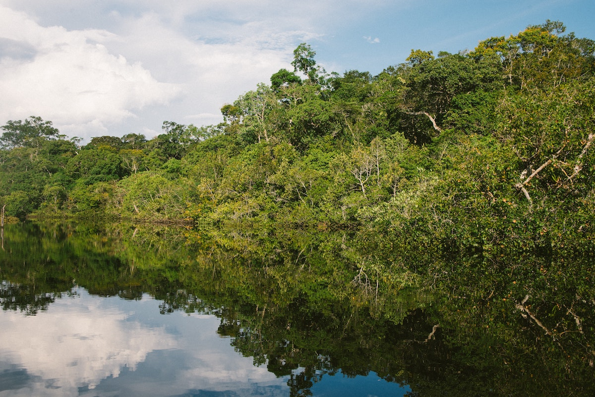 <p>The Brazilian Amazon. Many indigenous lands, including those in the Amazon, store significant amounts of carbon, partly because their vegetation is in better condition than other areas. Photo by Nathalia Segato/Unsplash</p>