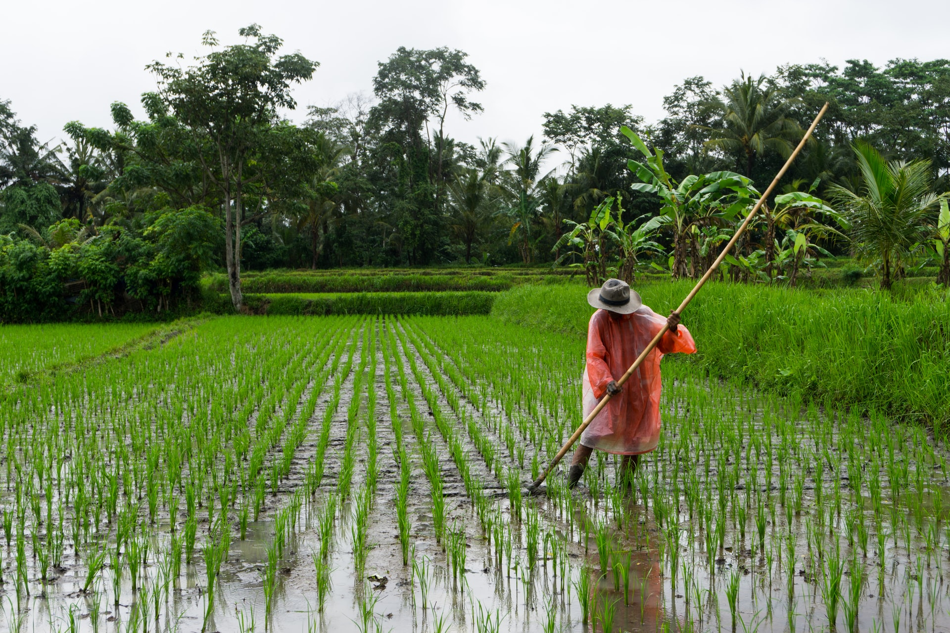<p>Rice fields in Ubud, Indonesia. Photo by Simon Fanger/Unsplash</p>
