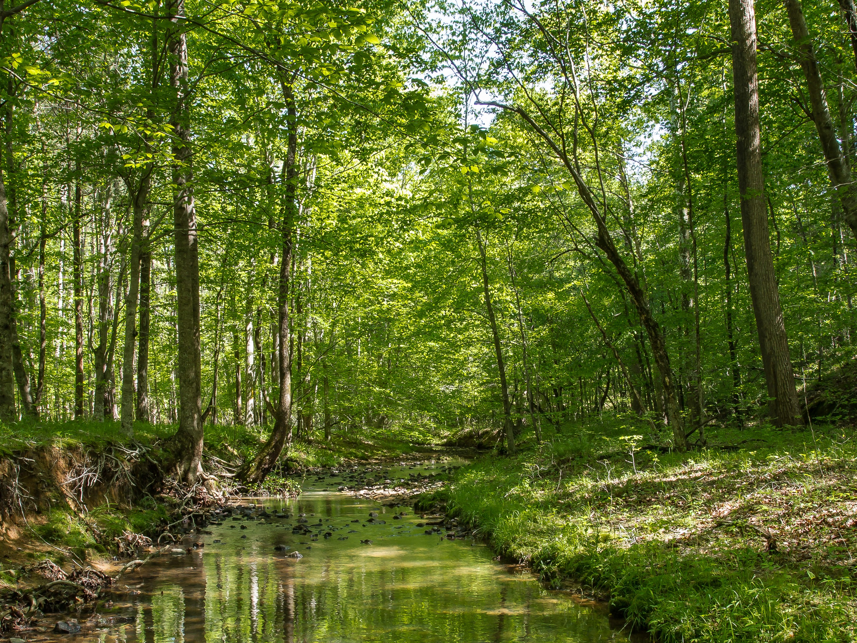 <p>Local land trusts are able to responsibly manage the Triangle region and protect water supplies. Photo by Sam Upchurch/The Conservation Fund</p>