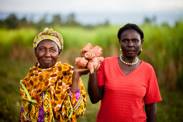 <p>Farmers grow sweet potatoes in Kenya. The country has taken steps to ensure access to affordable, nutritious food. Photo byFintrac Inc./USAID/Flickr</p>