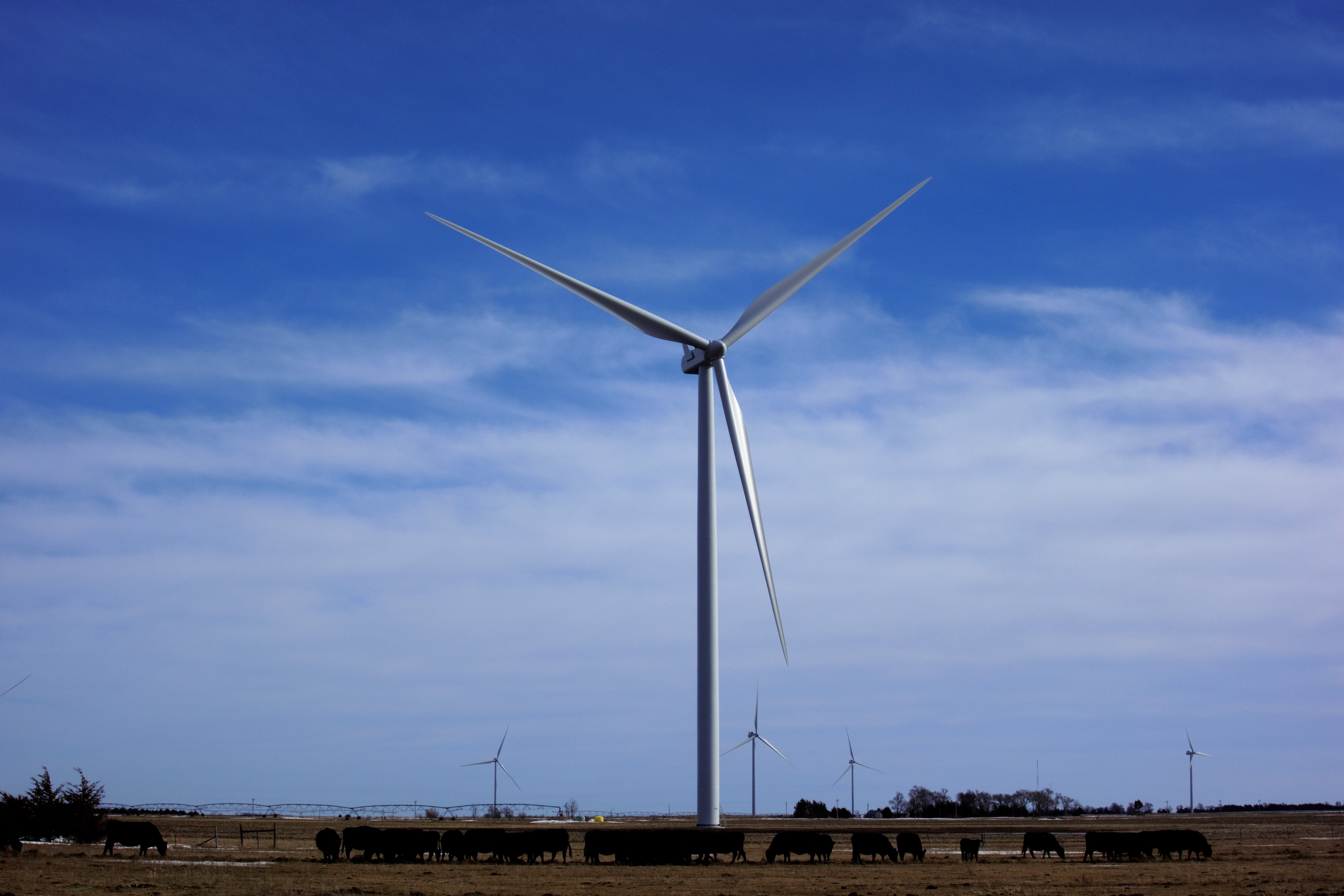 <p>In addition to the economic benefits, hosting wind turbines allows Mike Zakrzewski to better care for his land and cattle. Photo by Mike Zakrzewski</p>